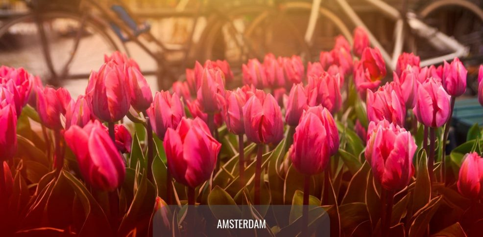 Letalska karta Leti Ceneje: letalske karte Amsterdam
